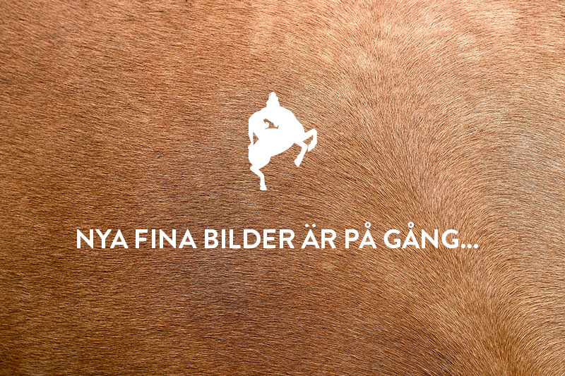 Anna Persson lardinger
