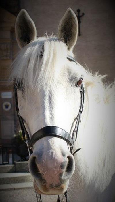 wirsbo-ridcenter-ponny-derby