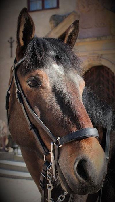 wirsbo-ridcenter-ponny-horyda-alwin