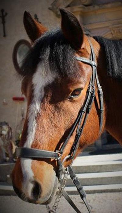 wirsbo-ridcenter-ponny-lydican-liam